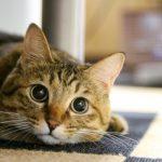 大切なペットを守るペット保険の選び方と特徴